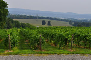8.3.12 10.1 wineryPennsylvania's beautiful wine country from DBC-MAR tour